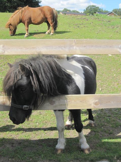 Vores-dyr-ponyer-4-1