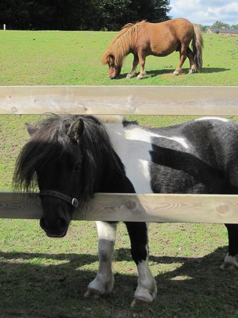 Vores-dyr-ponyer-5-1